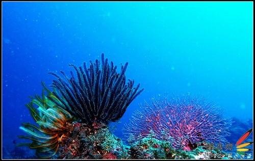 海底两万里第3页_行摄频道-蜂鸟网