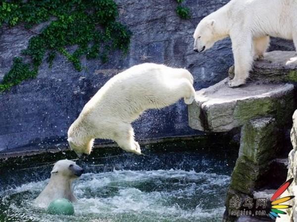 比想象中还要可爱的动物摄影作品