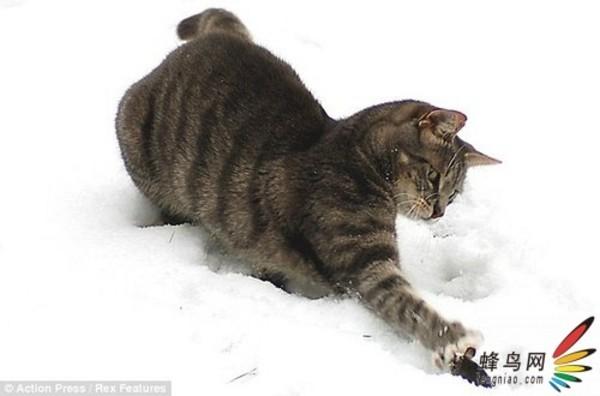 强势的猫毫不留情地将爪子挥向小老鼠