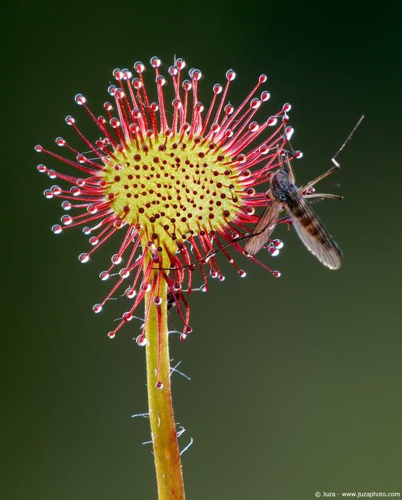 花卉海量摄影作品v花卉(上)歌曲视频温岚图片