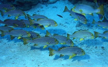 神秘的海底世界 1440x900《宽屏》壁纸