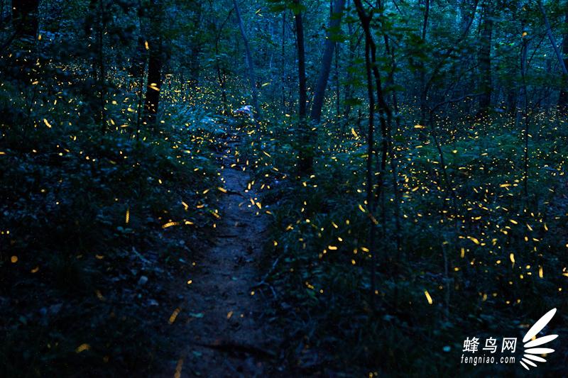 萤火虫 firefly-野性中国——2011中国濒危物种影像