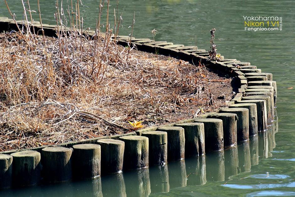 湖心木桩组成的优美曲线-几何三溪园 尼康1 v1日本园