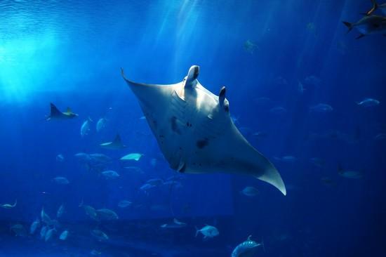 美妙海底世界 探秘冲绳水族馆