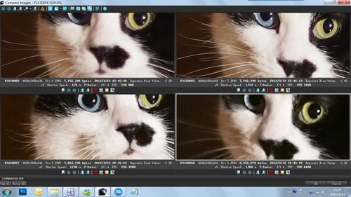 猫咪情侣头像两张分开
