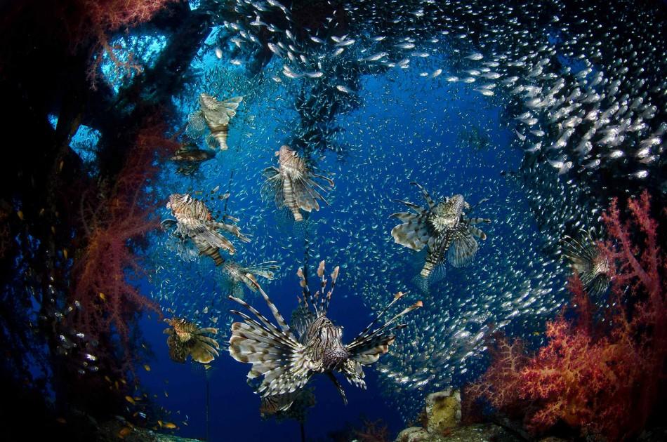 微距摄影,鱼类和海洋动物肖像摄影以及广角摄影