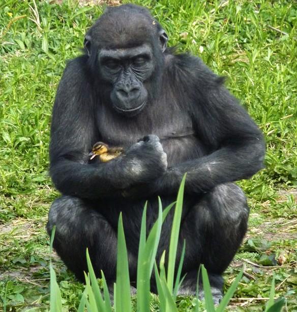 外媒评2011年度最萌动物照片套图-第3张
