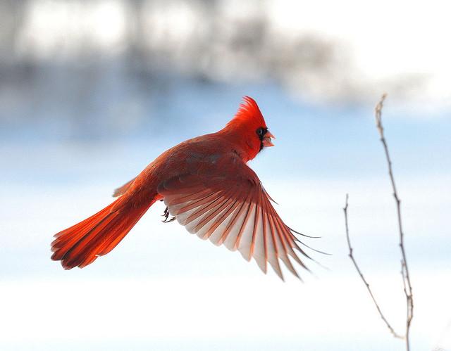 飞行中的 鸟的绝美瞬间套图 第12张