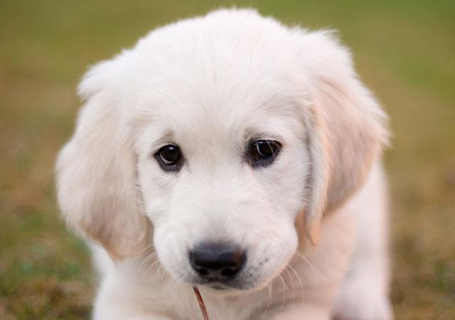 最近由于某地出台限狗令在网友中掀起了打狗还是爱狗的讨论风波,其实狗狗本身没有错,需要规范的是养狗之人的文明准则。不妨碍别人才是文明养犬的正确方式,从另一方面讲这也给了这些可爱宠物更多的生存空间。以下这些超萌的狗狗肖像希望可以唤起人们对文明养犬的关注。