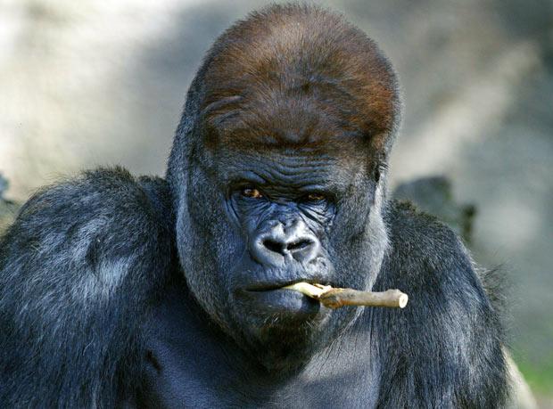 2010年度搞笑动物图片系列---笑的肚子痛! 组图