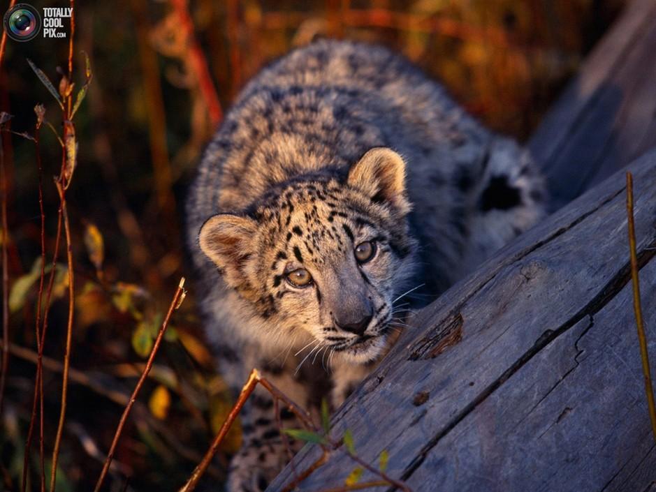 50张令人震撼的高清动物照片 组图