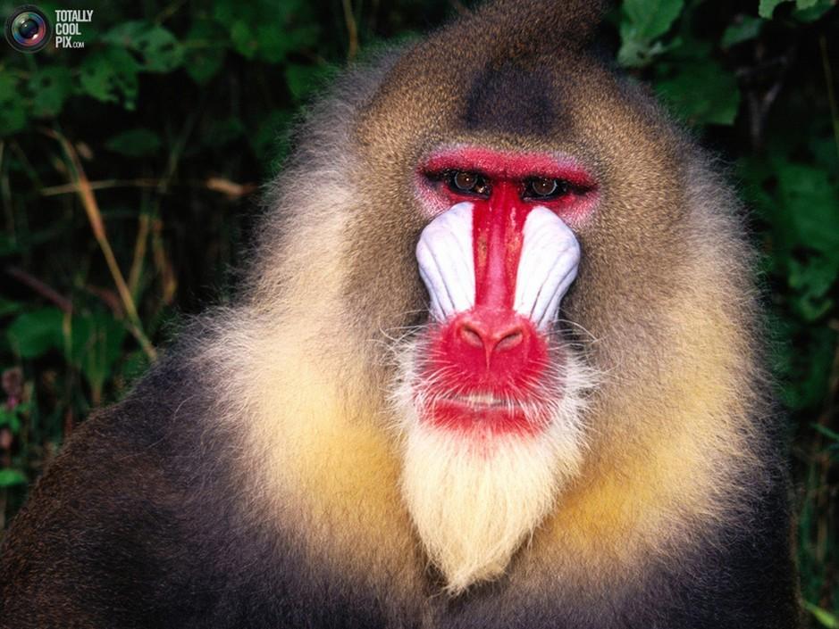 50张令人震撼的高清动物照片套图-第41张