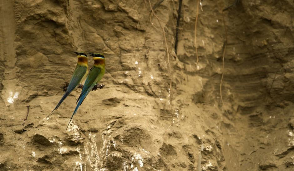 2011年5月26日,由野性中国工作室和云南高黎贡山国家级自然保护区联合主办的中国野生动物摄影大师班顺利落下帷幕。在为期5天的课程中,来自全国各地的17名学员和7位国内外知名野生动物摄影师一起,通过12堂课程、72小时野外强化拍摄训练,学习特殊拍摄设备和器材的使用方法、野外拍摄灵长类和鸟类的高级技巧,以及82种国家重点保护野生动植物的相关知识。
