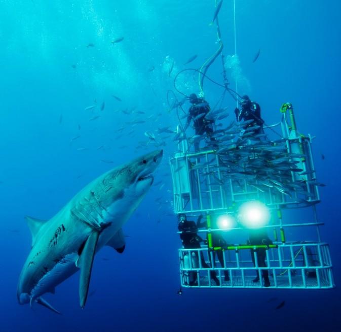 直面大白鲨 photo by david litchfield