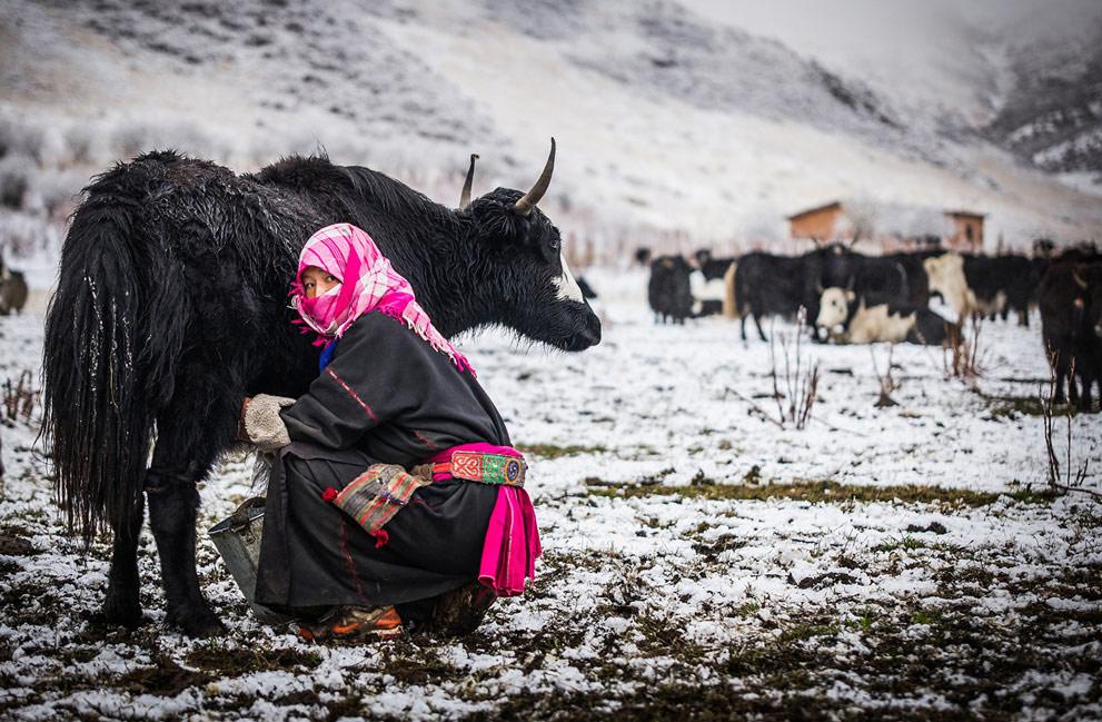 40张最新国家地理旅行家摄影大赛佳作 - 香儿 - 香儿