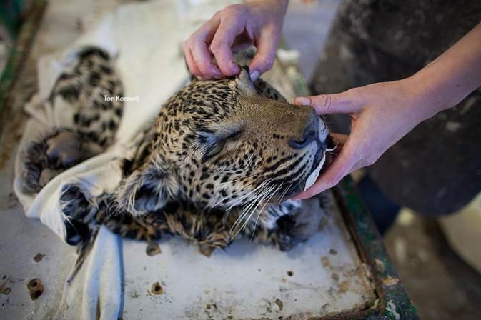 动物标本的背后 探秘纳米比亚温得和克 组图