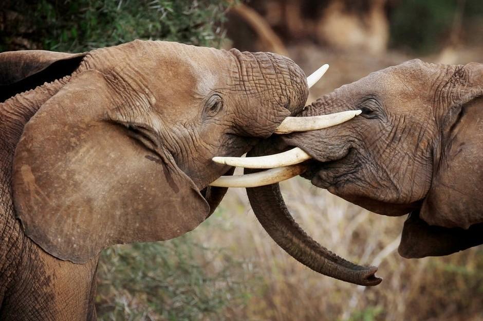 姚明拍摄野生动物保护宣传片
