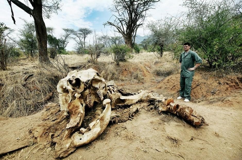 2012年8月中旬,在非洲肯尼亚,NBA篮球明星姚明到这里拍摄野生动物保护宣传片,目的是宣传和提倡野生救援,保护野生动物,拒绝非法杀戮与走私买卖。   如今,做为野生救援协会大使的姚明,还亲自探访了肯尼亚首都内罗比的动物孤儿院。在内罗比动物孤儿院,姚明亲自为一只名叫闪电博尔特的雄性猎豹幼崽刷毛。这只猎豹幼崽是被牙买加牙短跑运动员收养的。   在肯尼亚当地,姚明受到了非洲土著民族热烈的欢迎。