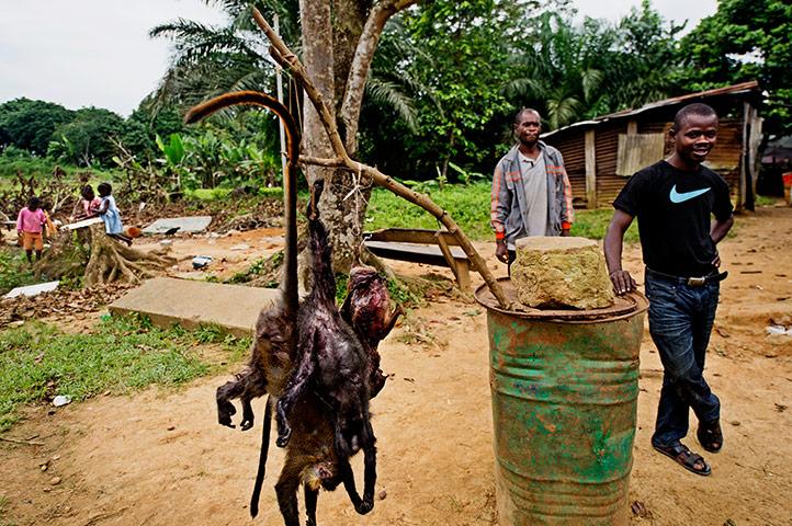 纪实摄影:加蓬抵制非法猎杀野生动物 组图