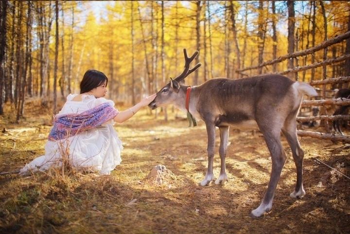 一鹿走来全是风景