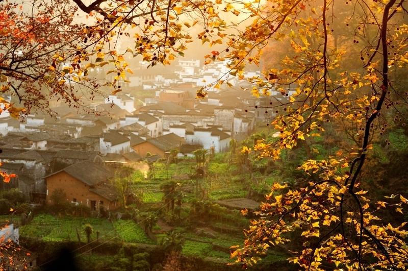婺源除了春天的油菜花以外,更美的是秋景。秋天是婺源最好的季节,深秋时节,抬头放眼,但见一片片红叶林映入眼帘,满山到处都是红色的枫树,满山红叶竞相争艳,似红霞缭绕,情趣盎然,灰白的民居与枫林之红交相辉映,形成了秋季婺源乡村别样的风光,五彩缤纷的颜色和谐搭配,构成一幅幅世间绝美的图画。漫步在婺源古村中用青石板铺就的小路上,两旁是小镇居民前后青藤缠绕的古居,前面是清澈见底的小溪倒映出粉墙黛瓦的古宅和浣衣女的身影,宛若进入了天然的画卷。   婺源秋景摄影行程推荐