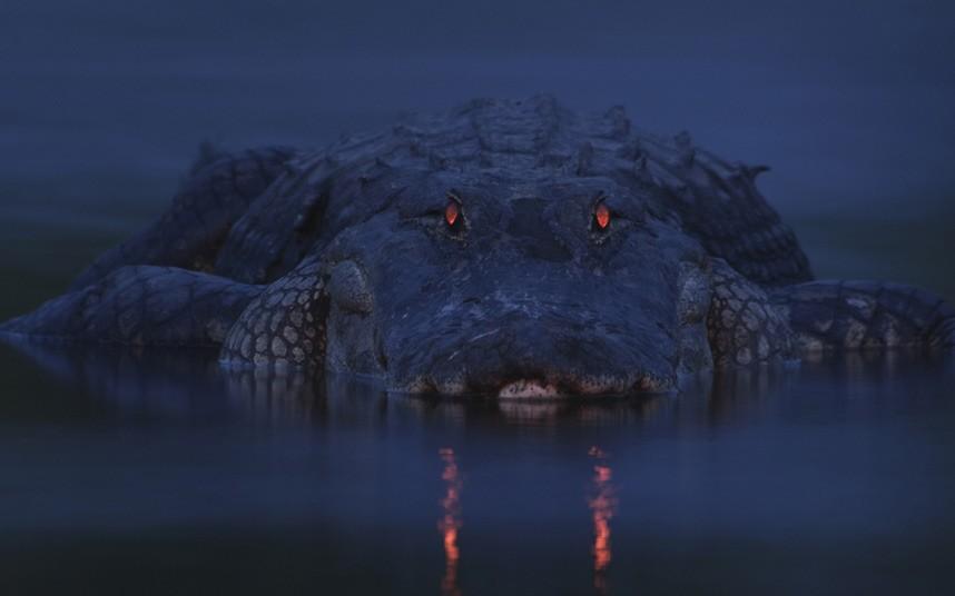 2012年威立雅环境野生动物摄影大赛作品 组图
