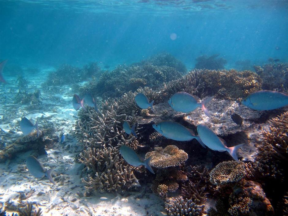 奇幻之旅 80张马尔代夫海底潜水摄影作品 组图