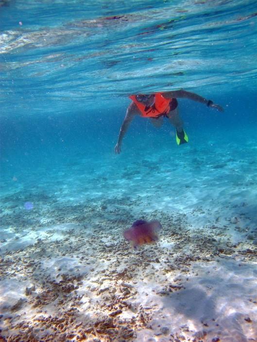潜入马尔代夫深蓝的海底世界,与美丽的鱼儿和珊瑚礁共舞,这是一幅