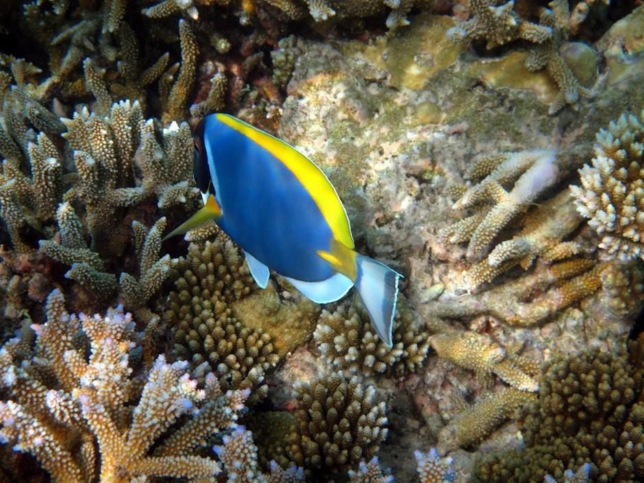 80张马尔代夫海底潜水摄影作品