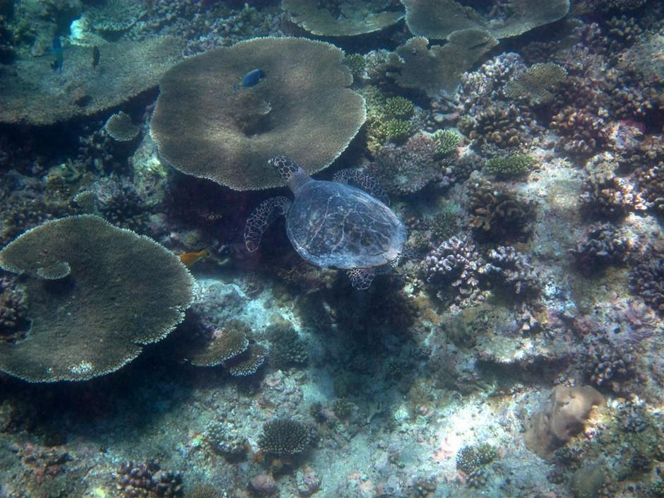 马尔代夫是印度洋上的岛国,拥有1200余个小珊瑚岛。这片群岛被世人誉为上帝抛洒到人间的项链、印度洋上最后的人间乐园;西方人则喜欢称呼她为失落的天堂。   白沙、蓝海、绿岛,在印度洋广阔的蓝色海域中,马尔代夫群岛就是一串白沙环绕的绿色岛屿。领略过马尔代夫的旖旎风光后,许多人都认为它是地球上最后的乐园。   浪漫休闲,青春活力,你可以说这里是上帝抖落到凡间的一串珍珠,也可以说她是一片碎玉,因为白色沙滩怀抱里的海岛就像一粒粒珍珠,而珍珠旁的海水就像是一片片美玉.