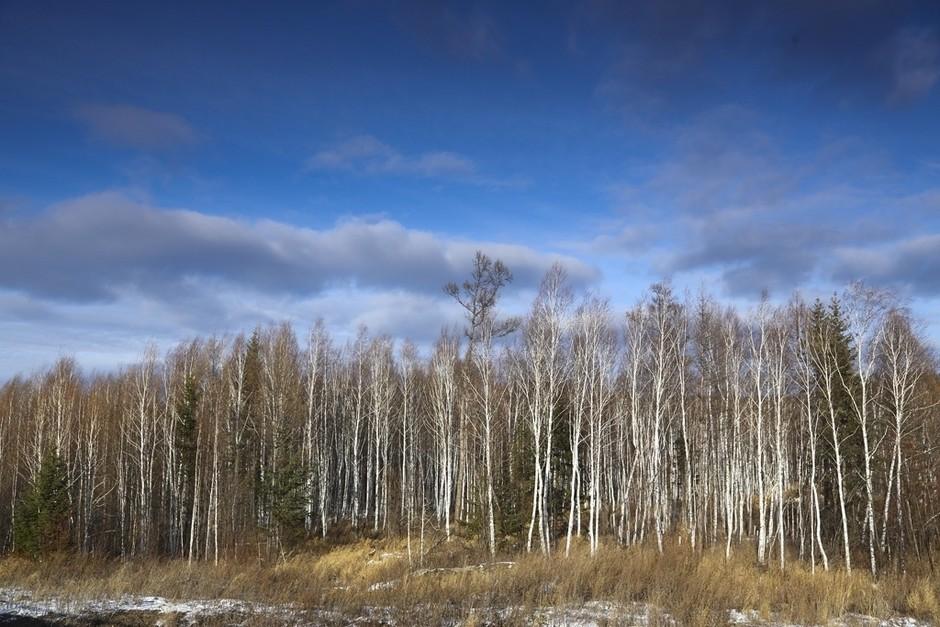 白桦林-英朗gt环中国路试 哈尔滨到漠河风光美图套图